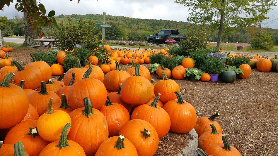 pumpkins in yard.jpg