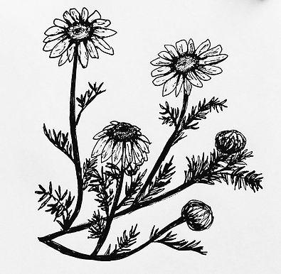 flores 6 (1).jpg