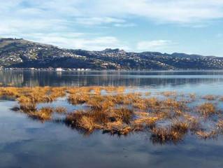 Parts of coastal hazards report deemed 'misleading'