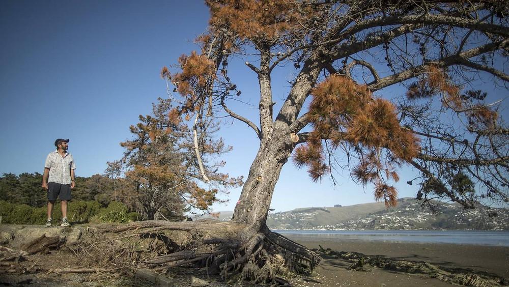 CHC estuary edge damage and erosion