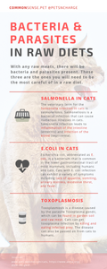 This info-graphic provides the medical descriptions of Salmonella, e.Coli, and toxoplasmosis in cats specifically