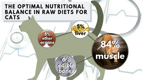 Raw Diet for Cats: A Basic Guide