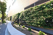 Green, live wall in Evanston, Illinois