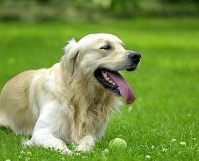 dog-park-sm-copy-grande_1_orig.jpg