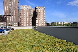 Dominicks-green-roof-1.jpg