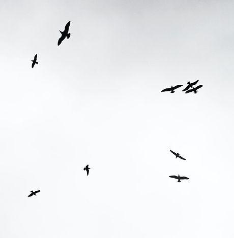 Just Adam - Birds.jpg