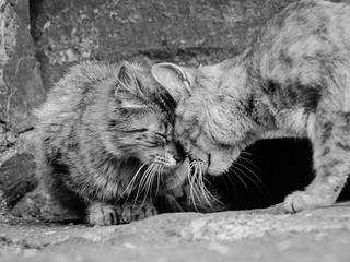 溝通的關鍵-同理心(4/4) 三個了解他人看法的技巧
