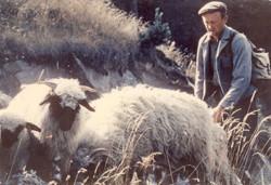 shepherd above Zermat