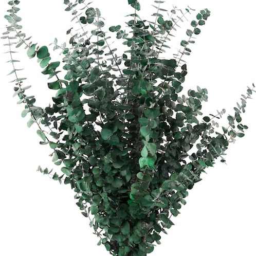 It's A Vibe (eucalyptus)