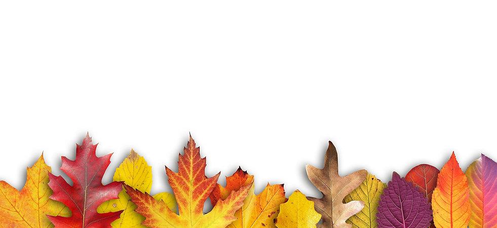 fall-941159_1920.jpg
