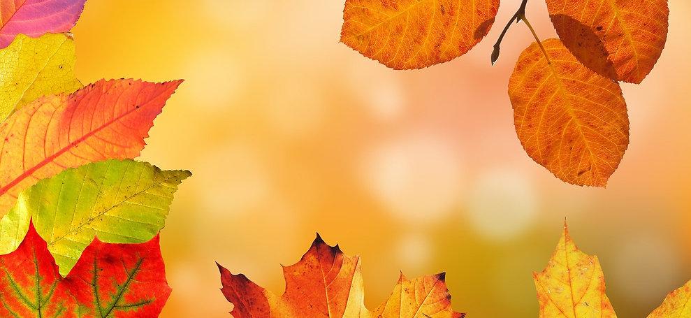 autumn-1649362_1920.jpg