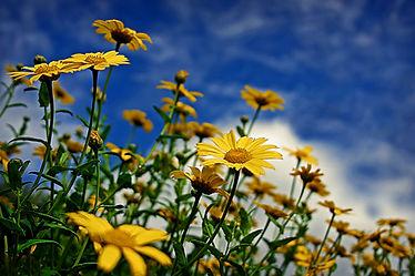nature-garden-flower-flowers-green.jpeg