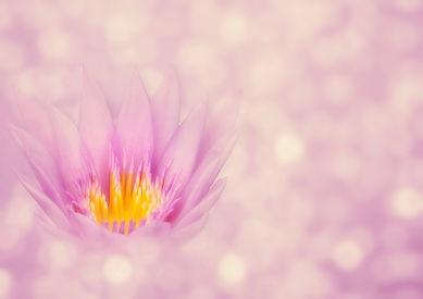 lotus-4228826_1280.jpg
