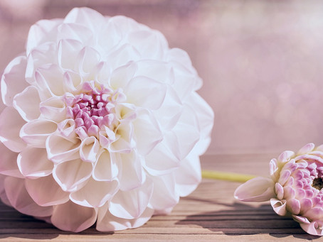 Faire éclore les fleurs