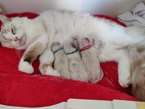 Faylinn en Kittens