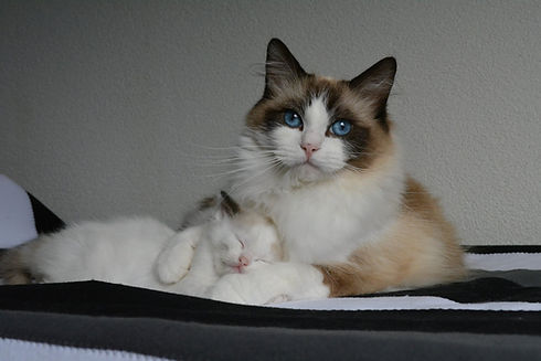 Marie en Pippa