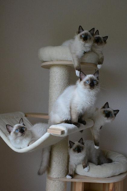 Kittens hailey