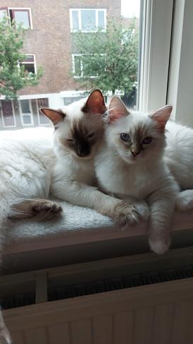 Lulu & Pip (Gloria)