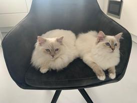Lola (Skye) & Nova (Gia)