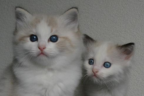 Aristocats nestje.JPG