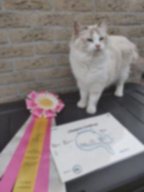 Faylinn Champion