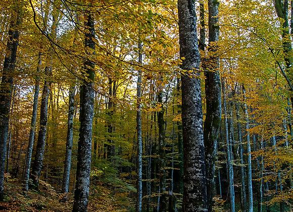 Floresta-3