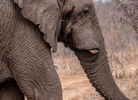 Elefante-2