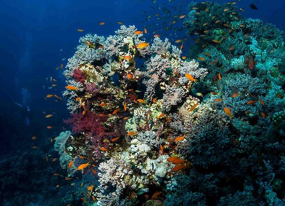 Recife de Coral-2