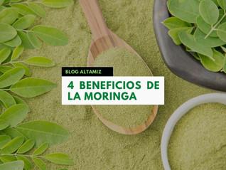 4 Beneficios de la Moringa