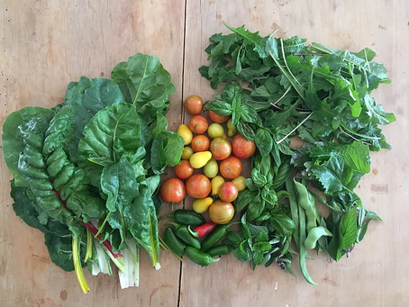 Starting Your Own Veggie Patch On Any Budget