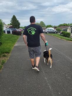 envi dog walking service.jpg