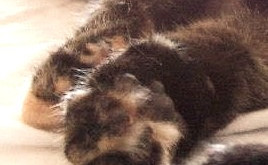 Take a Paws for Toe-Beans: Its the Purrrfect way to meet your Cat!