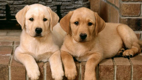 The 5 things to consider before you buy a Puppy