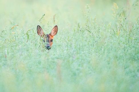 Reegreengrass.jpg