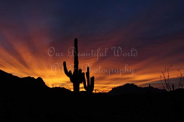 saguaro sunrise 2 resized.jpg