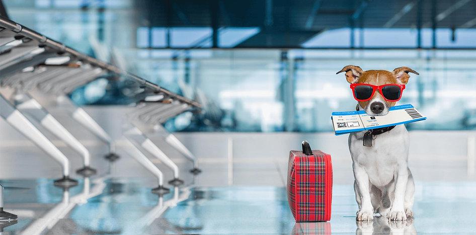 israel pets travel
