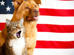 Flight with dogs and cats from Israel To USA
