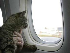 טיסות קרגו עם חיות - איך? כמה? למה?