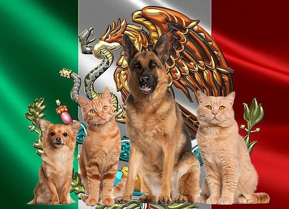 חבילת הטסה מישראל למקסיקו