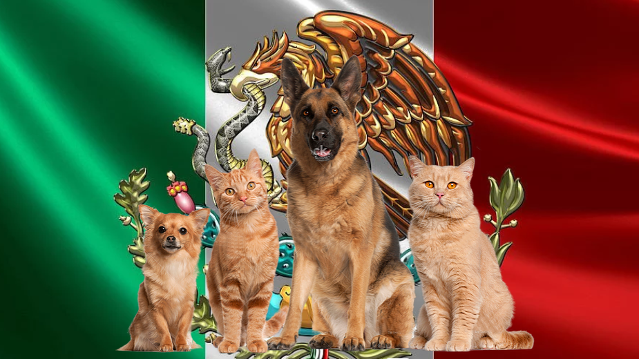 Pet package from Mexico to Israel