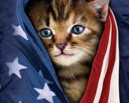 """הטסת חתולים לחו""""ל"""