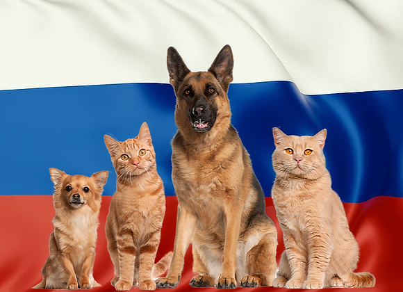 Pet package from Ukraine to Israel