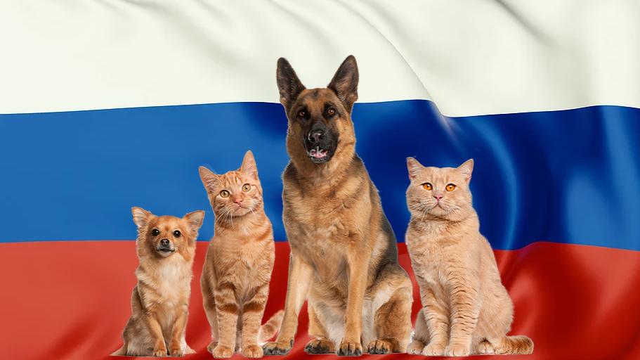 חבילת הטסה מישראל לרוסיה