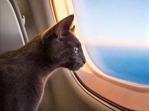 Cargo flights with animals - how? 'were? when?