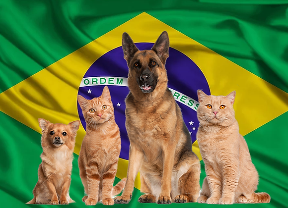 Pet package from Brazil to Israel