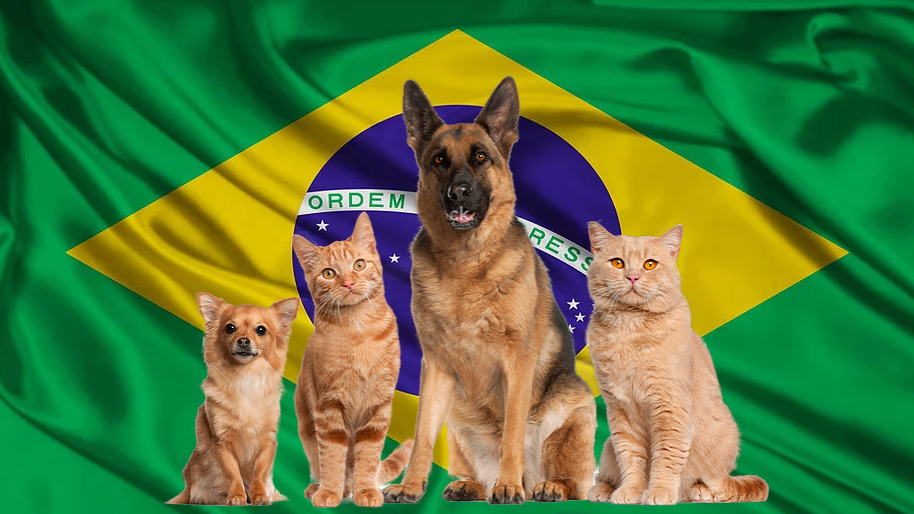 Pet package from Israel to Brazil