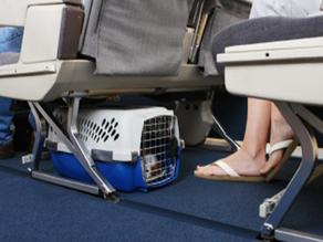 טיסות עם חיות - כל המידע על מסלולי טיסה