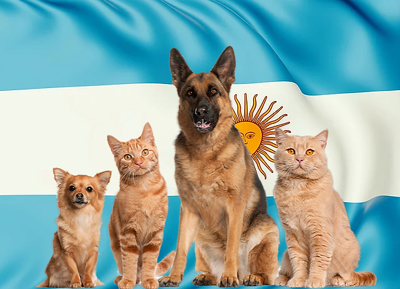 Pet package from Israel to Argentina