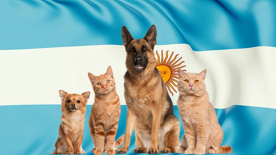 Pet package from Argentina to Israel