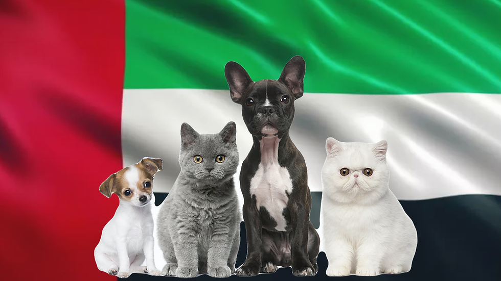 Pet package from Israel to Dubai